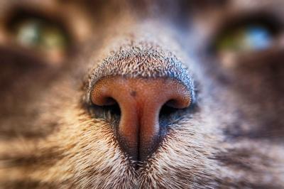 Freek's neus